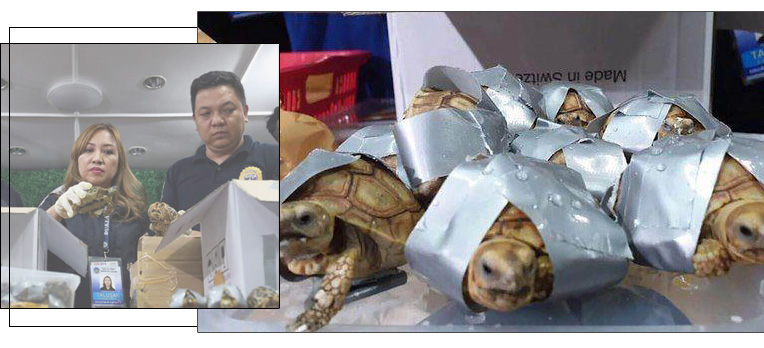 Attempt to smuggle endangered  species at Manila Airport