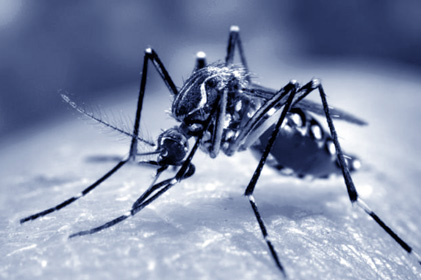 Eastern Samar placed under state of calamity due to surge in dengue cases